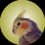 Oliver the Bird's Headshot